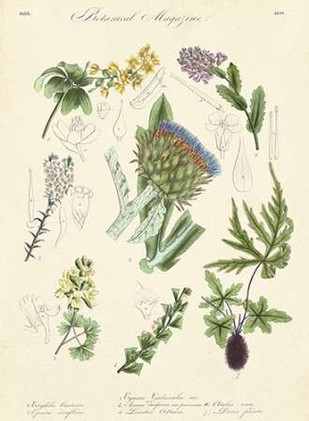 Botanical Register I Print By Unknown