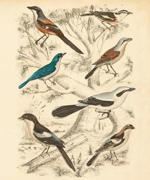 Avian Habitat V Digital Print by Milne,Decorative
