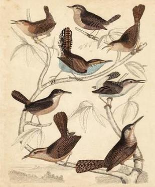 Avian Habitat VI Digital Print by Milne,Decorative