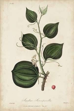 Medicinal Botany I Digital Print by Churchill,Decorative