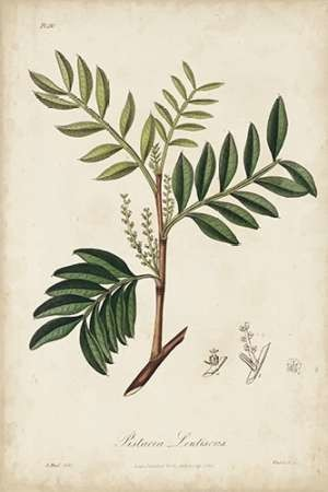 Medicinal Botany II Digital Print by Churchill,Decorative