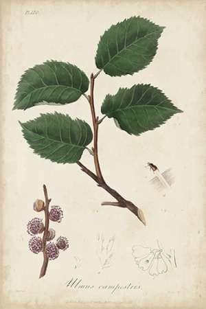 Medicinal Botany III Digital Print by Churchill,Decorative