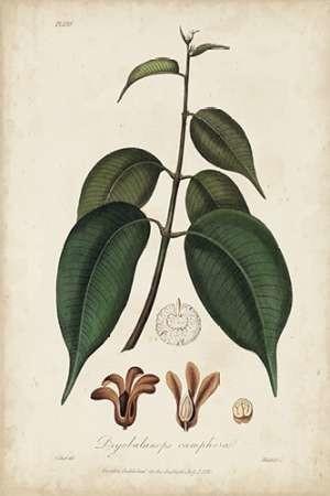 Medicinal Botany IV Digital Print by Churchill,Decorative