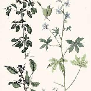 Berge Botanicals IV Digital Print by Berge,Decorative
