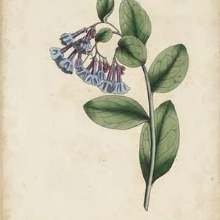 Lavender Curtis Botanicals I Digital Print by Curtis,Impressionism