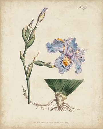 Lavender Curtis Botanicals IV Digital Print by Curtis,Decorative