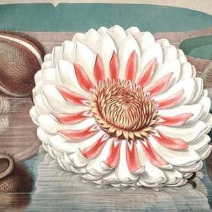 Vintage Water Lily III Digital Print by Vision Studio,Impressionism