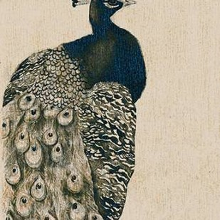 Textured Peacock I Digital Print by Popp, Grace,Impressionism