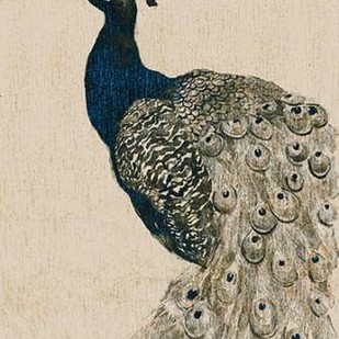Textured Peacock II Digital Print by Popp, Grace,Impressionism