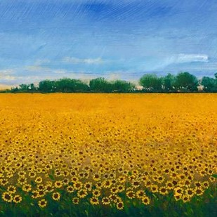 Field of Sunflowers II Digital Print by Otoole, Tim,Impressionism