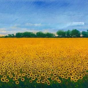Field of Sunflowers II Digital Print by Otoole, Tim,Impressionism
