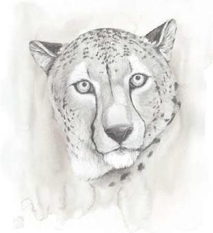 Big Cat Study I Digital Print by Popp, Grace,Illustration