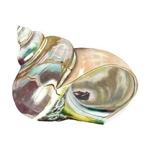 Seashore Souvenirs IV Digital Print by McCavitt, Naomi,Decorative