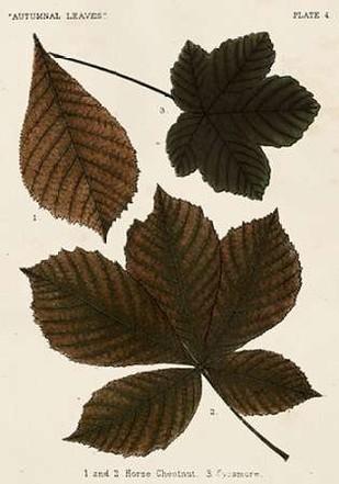 Autumnal Leaves III Digital Print by Vision Studio,Decorative
