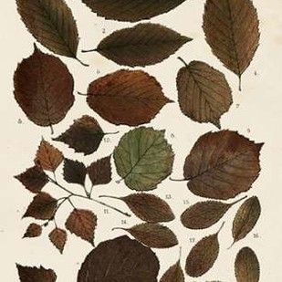 Autumnal Leaves VI Digital Print by Vision Studio,Decorative