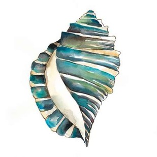 Aquarelle Shells I Digital Print by Zarris, Chariklia,Decorative
