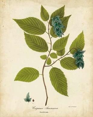 Hornbeam Tree Foliage Digital Print by Torrey, John,Decorative