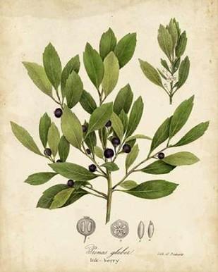Ink-berry Tree Foliage Digital Print by Torrey, John,Decorative