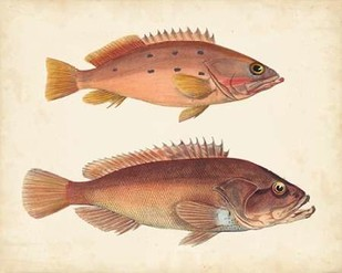 Antique Fish Species I Digital Print by Unknown,Realism