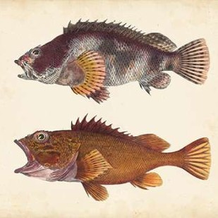 Antique Fish Species II Digital Print by Unknown,Realism