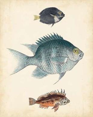 Antique Fish Species III Digital Print by Unknown,Realism