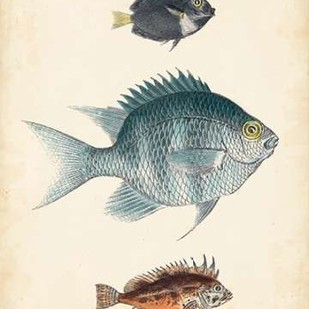 Antique Fish Species III Digital Print by Unknown,Realism