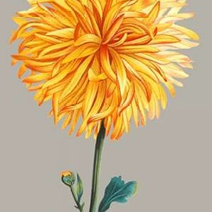 Chrysanthemum on Gray IV Digital Print by Vision Studio,Impressionism