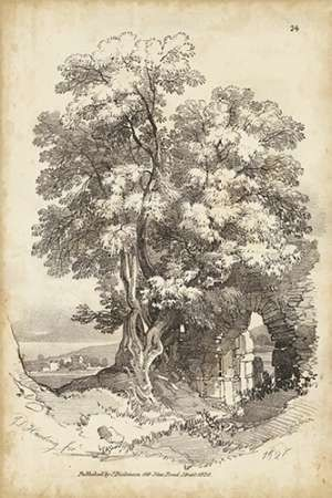 Noble Tree II Digital Print by Harding, J.D.,Illustration
