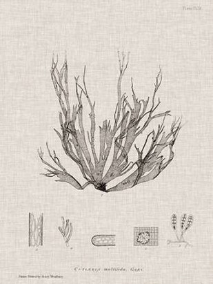 Charcoal & Linen Seaweed I Digital Print by Bradbury, Henry,Decorative