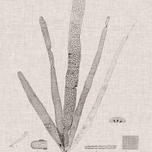 Charcoal & Linen Seaweed II Digital Print by Bradbury, Henry,Decorative