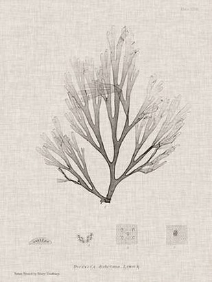 Charcoal & Linen Seaweed III Digital Print by Bradbury, Henry,Decorative
