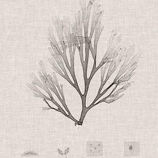 Charcoal & Linen Seaweed III Digital Print by Bradbury, Henry,Decorative