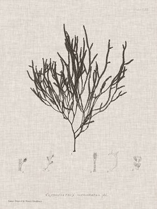 Charcoal & Linen Seaweed IV Digital Print by Bradbury, Henry,Decorative
