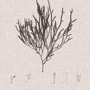 Charcoal & Linen Seaweed IV Digital Print by Bradbury, Henry,Decorative