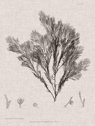 Charcoal & Linen Seaweed V Digital Print by Bradbury, Henry,Decorative