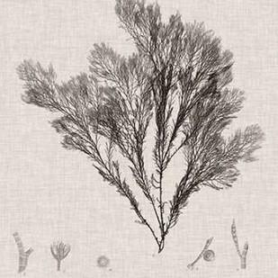 Charcoal & Linen Seaweed V Digital Print by Bradbury, Henry,Decorative