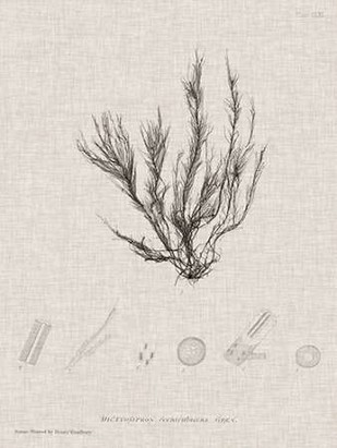 Charcoal & Linen Seaweed VI Digital Print by Bradbury, Henry,Decorative