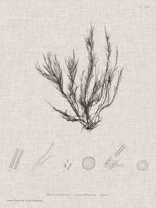 Charcoal & Linen Seaweed VI Digital Print by Bradbury, Henry,Decorative