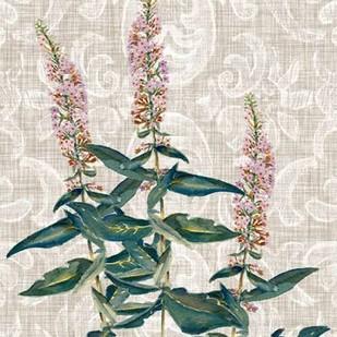 Flower Study Collection D Digital Print by Miller, Dianne,Decorative