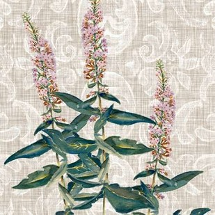 Flower Study Collection D Digital Print by Miller, Dianne,Decorative