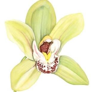 Orchid Beauty II Digital Print by Goldberger, Jennifer,Decorative