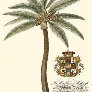 Coconut Palm Digital Print by Porter Design,Realism