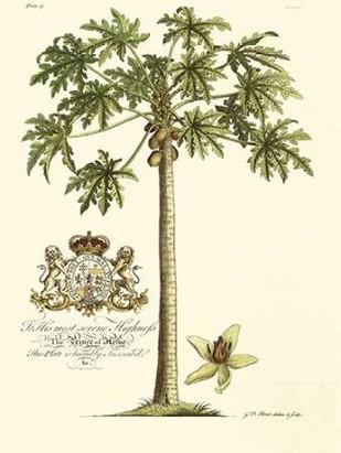 Papaya Tree Digital Print by Porter Design,Realism