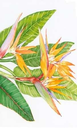 Exotic Flowers II Digital Print by Otoole, Tim,Decorative