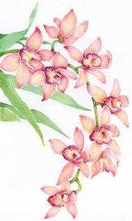 Exotic Flowers III Digital Print by Otoole, Tim,Impressionism