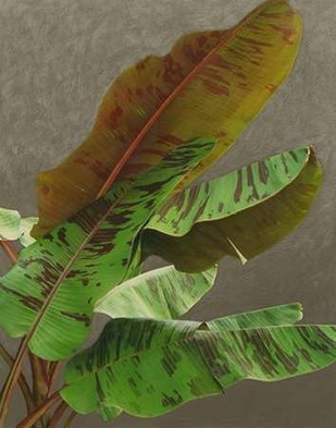 Non-Embellished Dramatic Leaves IV Digital Print by Zarris, Charliklia,Realism