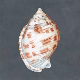 Shell on Slate I Digital Print by Meagher, Megan,Decorative