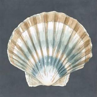 Shell on Slate III Digital Print by Meagher, Megan,Decorative