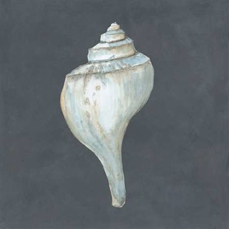 Shell on Slate IV Digital Print by Meagher, Megan,Impressionism