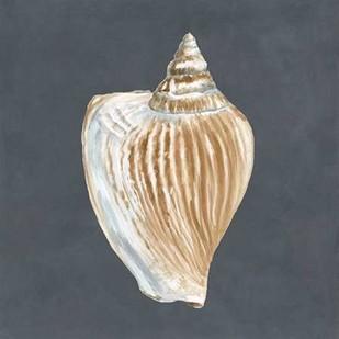 Shell on Slate VI Digital Print by Meagher, Megan,Decorative